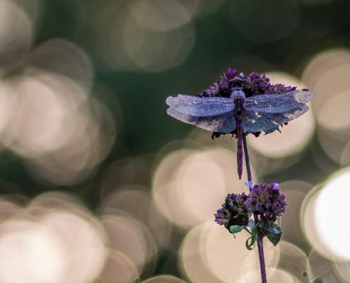 Macro fotografie | Tux Photography