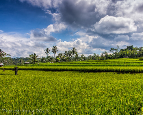 Foto's Indonesië - Bali - Rijstterrassen | Reisfotografie Tux Photography