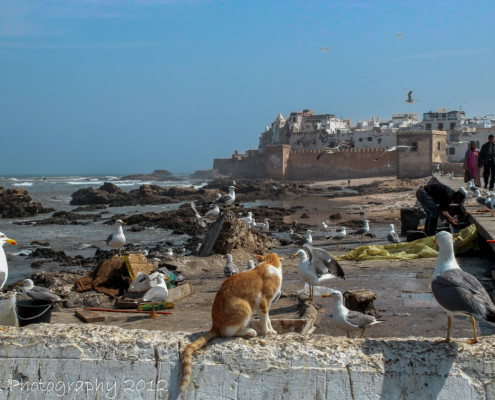 Foto's Marokko - medina Essaouira