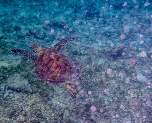 Foto' Indonesië - Gili Meno - Snorkelen - Schildpad | Reisfotografie Tux Photography