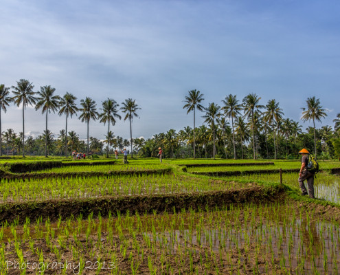 Foto's Indonesië - Java - Kalibaru plantage | Reisfotografie Tux Photography