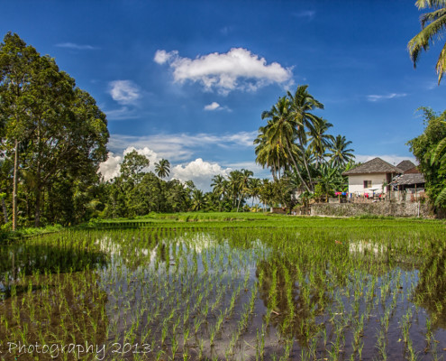Foto's Indonesië - Lombok - Rijstterrassen | Reisfotografie Tux Photography