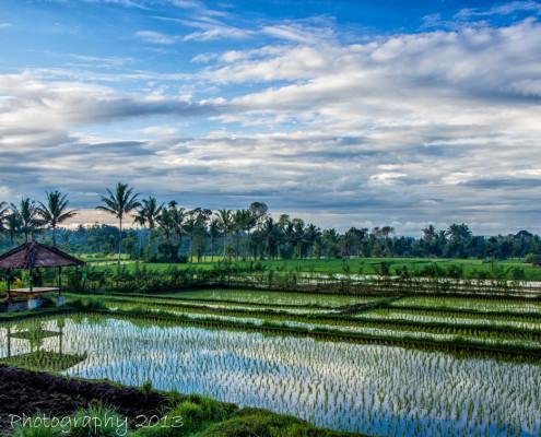 Foto's Indonesië - Lombok - Rijstterassen Tetebatu | Reisfotografie Tux Photography