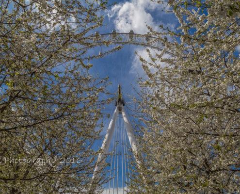 Foto's Londen - London Eye   Tux Photography